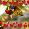熱烈な恋のスペイン語の表現、歌で学んじゃいますか?