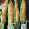 無農薬トウモロコシ@EMBC複合発酵バイオで栽培する健康農産物の会