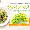 サラダクラブ&JA全農長野 共同企画シャインマスカット プレゼントキャンペーン