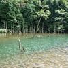 【青い水の絶景】山口県・蒼霧鯉池、再訪編