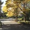 Seasons In The Autumn