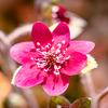 咲いてきた庭の花