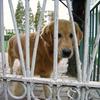 赤ちゃんを噛む犬と噛まない犬の違い、上海の餃子犬の思い出