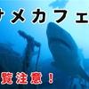 世界と日本のサメ食害事件を総まとめ。メキシコのサメカフェにて。