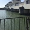 『太田川ハマボウ群落』静岡県遠州サーフ(遠州灘)海釣り完全攻略マップ