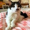 猫の腎臓病治療に希望の光!寿命が2倍 最長30年になるかも…