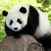 パンダ好きですが知らなかったこと・・・。