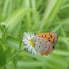 蝶を探そう 3月~4月版