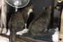 愛猫が悪性リンパ腫で亡くなった話する