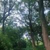 木・樹・植物