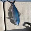 沖縄旅行中に釣りに行ってみた(11/27)