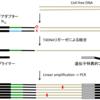 非重複統合リード塩基配列決定システム:non-overlapping integrated read sequencing system (NOIR-SS)