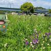 元気でねキバゴ!【ポケモンGOAR写真】初夏の多摩川河川敷にて