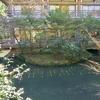 柳原神池(神奈川県鎌倉)