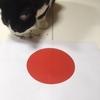 ★528鐘目『愛され続けたジムニーがモデルチェンジ!W杯で日本が神様に愛されたでしょうの巻』【エムPのイケてる大人計画】