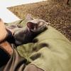 まもなく生後4ヶ月 ケージの外で寝るようになりました