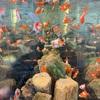 夏の思い出:日本橋三越の金魚