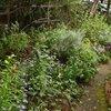 9月11日の庭