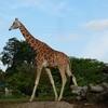 よこはま動物園ズーラシアは、広大な敷地と動物の種類がすごい