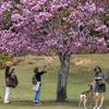 奈良公園にて、桜と鹿さんに癒されにいく休日。