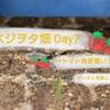トマト発芽そろう~播種から発芽までのデータと考察~ベジオタ畑Day7