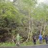 タケノコ採りの61歳女性、クマに襲われ?死亡