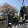 花は桜木。肉屋のむら八さんの小売は明日。
