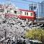 桜の咲く頃、京急2000形が引退。