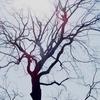 2018-03-25(日)荒川放水路沿いの桜を追って76.01km Part 4/5