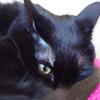 今日の黒猫モモ&白黒猫ナナの動画ー691