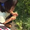 鳴る・くっつく・はじける・釣れる!?遊べる草花7選(初級編)子供といっしょに探してみよう!