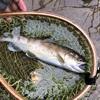渓流シーズン最終釣行!小雨の短時間釣行記2020年9月26日