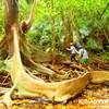 島旅で原始の森へ行ってみよう〜西表島で人気の観光アウトドア体験