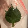 最近の話 と 旬な『大葉』の長持ちする保管方法 と 好きな食べ方