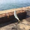 【速報】アジのサビキ釣り!ベストな時期と入れ食いの時間帯!