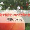 桃狩りなら福島市・フルーツラインへ!『まるえ果樹園』で30分食べ放題を体験してきたよ!