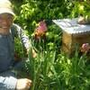 東京賢治シュタイナー学校        蜜蜂の巨匠