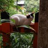 お稲荷さんの白猫ちゃん 善龍庵