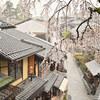 雨の日の産寧坂・八坂の塔・ねねの道の桜