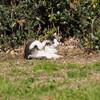 E-M1 葛西臨海公園(4) 猫