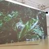 ■ヨコトリ2020:ジェン・ボー《シダ性愛》エロと美術の境界