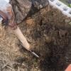 じゃがいも植えの準備 ☆ 小松菜・マリーゴールドの種まき