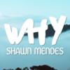 【和訳/歌詞】Why/Shawn Mendes(ショーン・メンデス)