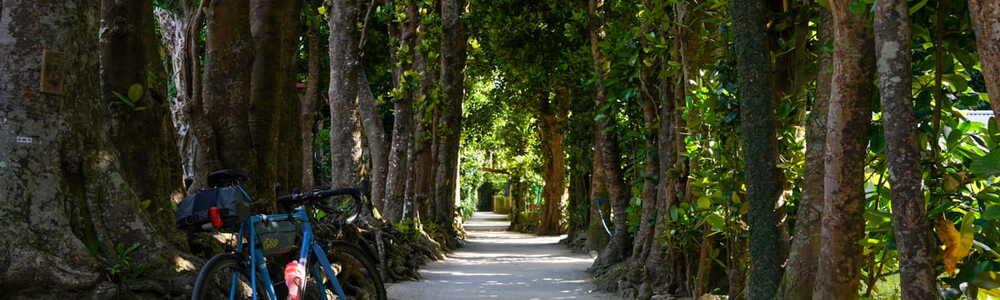 【古宇利島~備瀬のフクギ並木】エメラルドグリーンの海を求めて、五月晴れの沖縄を走ってきた Part 2/3 (@沖縄県本部町)