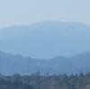 2月のウオーキング  樹木ウオッチング(3)アラカシ