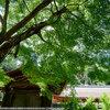 京都、北山へ3 正伝寺