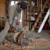 初めてのドリル講座|欅の木を、ドリルで掘る。