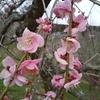 梅の花から受けとるメッセージ