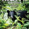 【オススメホラー】「ヒグマ襲撃事件」の本3選!【熊事件】
