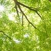 2018年春、六甲山を縦横無尽に歩き回る企画 第八弾 始まります。